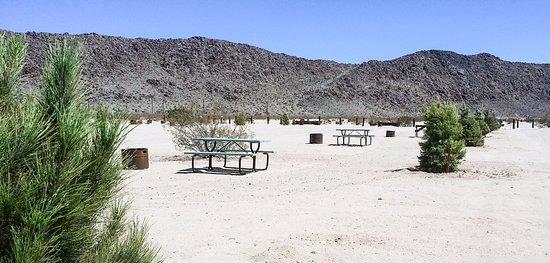Joshua Tree Campground Sites